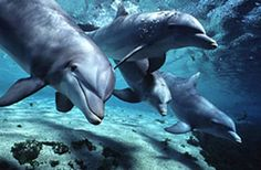 sea world Photo: dolphins. Hd Desktop, Dolphin Hd, Animals And Pets, Cute Animals, Wild Animals, Baby Dolphins, Underwater Sea, Deep Sea Fishing, Animal Facts