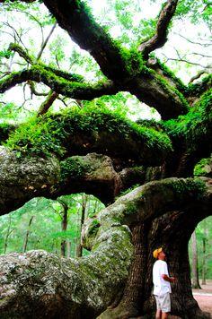 Angle Oak Tree - Folley Beach