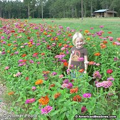 Heat up your meadow with the bold colors of easy-to-grow zinnias. Blooming from midsummer until frost, they're a must for summer bouquets and ideal for adding extra pizzazz. Annual.