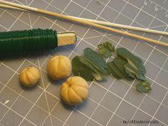 Pumpkin - Pumpkin plant tutorial Finland