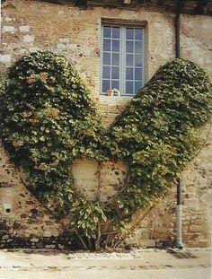 espalier - heart shaped <3