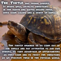 The Turtle can not separate itself from its shell, its home. This reminds us to care for our Earth home.