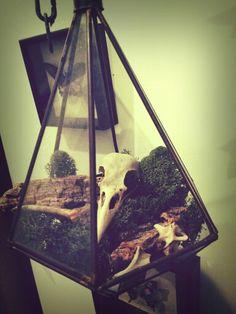 Dead bird terrarium. #skull #terrarium #oddity