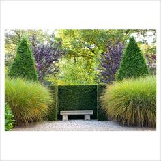 Stone bench nestled between Miscanthus gracillimus and clipped conifers : Photographer:  Elke Borkowski