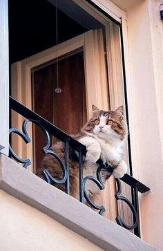 Romeow, Romeow, wherefore art thou Romeow?