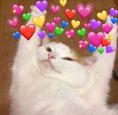 Cute Cat Memes, Cute Animal Memes, Cute Love Memes, Cute Funny Animals, Cute Cats And Kittens, Kittens Cutest, Gatos Cool, Cute Cat Wallpaper, Cat Aesthetic