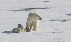 Polar bear cub splashes in puddles for the first time | Daily Mail Online