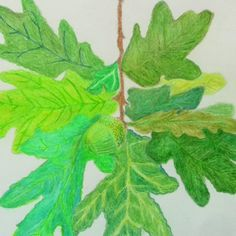 sketch of pine leaves and acorn on 27/03/2012
