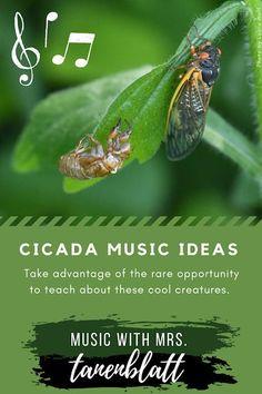 Cicada Music Ideas for elementary music Elementary Choir, Elementary Music Lessons, Music Lessons For Kids, Kindergarten Lessons, Classroom Management Tips, Behavior Management, Music Classroom, Classroom Setup, Teaching Music