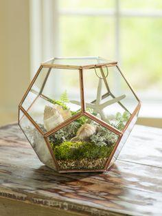 Globe Tabletop Terrarium - Glass Terrarium - Plant Terrarium