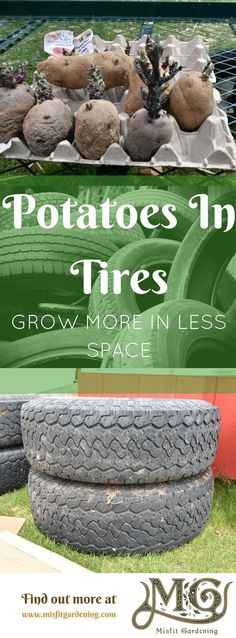 Find out how to grow more in your by growing potatoes vertically click t. Find out how to Hydroponic Gardening, Hydroponics, Organic Gardening, Organic Vegetables, Growing Vegetables, Gardening For Beginners, Gardening Tips, Tire Garden, Growing Mushrooms