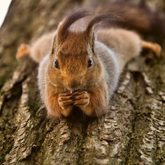 @Chelsy Forbes oh you know, just hanging out... eating acorns.... dreaming of my prince charming