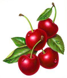 cherries, foodartist.wordpress.com