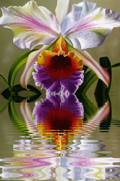 - My Desktop Nexus Unusual Flowers, Unusual Plants, Rare Flowers, Amazing Flowers, Orchid Drawing, Lilies Drawing, Flower Images, Flower Art, Orchids Painting