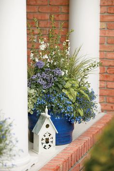 White Summer Snapdragon, Laguna Compact Blue with eye lobelia, Licorice Splash licorice plant, Atlantis Heliotrope and Icterina Golden Leaf Sage Blue Plants, Tall Plants, Shade Plants, Potted Plants, Shade Annuals, Flowering Plants, Plant Pots, Container Flowers, Container Plants