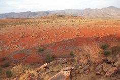 Mystical ring structures called fairy circles dot the desert of Southwestern Africa in the Namib desert.