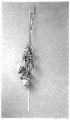 Skip Steinworth. Hanging Flower, 2008, graphite on paper, 40 x 27 inches