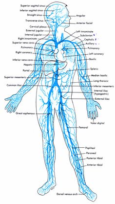 Great vein chart