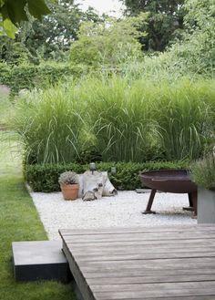 hoge grassen, gras, kiezel, houten deck - Garten & Gemüseanbau mit Kindern - Home Wooden Terrace, Wooden Decks, Wooden Fence, Garden Types, Back Gardens, Outdoor Gardens, Small Gardens, Unique Garden, Garden Modern