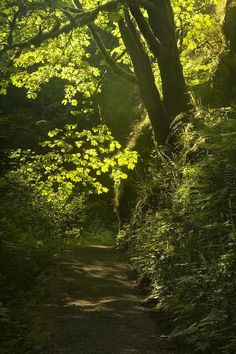 Forest Path, Oregon