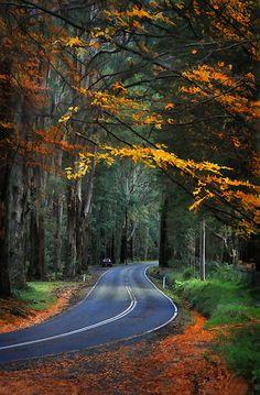Think this is Sherbrooke Rd. Wonderful Places, Great Places, Beautiful Places, Places To Visit, Australia Living, Australia Travel, Australia Photos, Vic Australia, Melbourne Australia