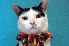 """Putting a scrunchie-like collar on cats reduced the amount of native wildlife killed by more than half: Murdoch University PhD student Catherine Hall observed the behaviour of 114 cats for two years, """"Bright colours are very noticeable to songbirds, they should see the cats further away, allowing them to escape earlier."""""""