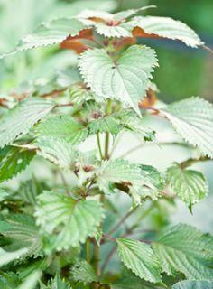 How to grow your happy hour herb garden!