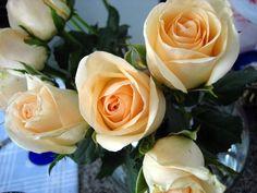 rosas champagne - Pesquisa Google