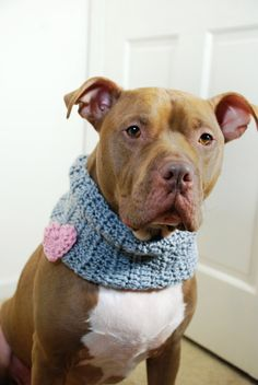 Dog Cowl Crochet Grey with Pink Heart by courtanai on Etsy Crochet Flower Scarf, Crochet Scarves, Crochet Flowers, Crochet Snood, Knitting Projects, Crochet Projects, Crochet Dog Clothes, Dog Sweaters, Crochet Animals