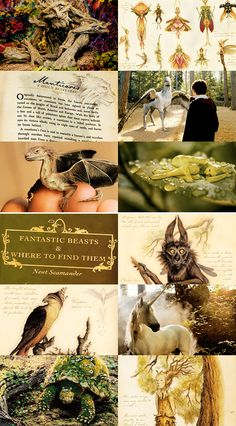 Hogwarts subjects | Care of Magical Creatures