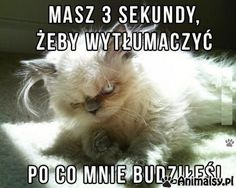 Trendy Funny Pictures With Captions Hilarious Grumpy Cat Funny Shit, Funny Cute, The Funny, Hilarious, Funny Animal Pictures, Funny Photos, Funny Animals, Cute Animals, Angry Animals