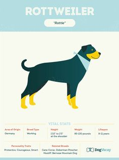 Everything You Need to Know About the Rottweiler....RIP Sweet...