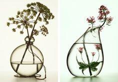 Peter Lippmann medicinal plants