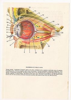 2 Vintage Anatomical Prints Medical Diagrams by FromEuropeWithLove, $5.90