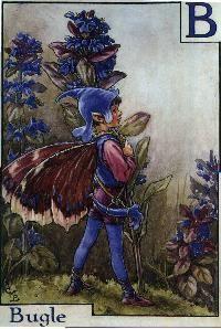 C M Barker fairy art, the alphabet fairies!