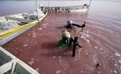 Lake Retba: Workers sift through the lake in a bid to collect salt
