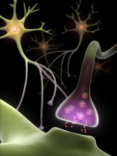 The evolving story of rapid changes in the brain with new synapses & neurons just added a new type of neuroplasticity involving changes in neurotransmitters