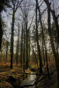 The New Forest. Hampshire, England
