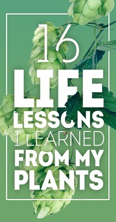 16 Life Lessons You Can Learn From Plants