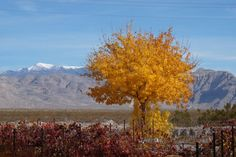See 82 photos and 20 tips from 793 visitors to Pahrump Valley Winery. Cottages, Rv, Vineyard, Scenery, Autumn, Wine, Mountains, Photos, Travel