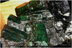 840 Pounds Bahia Emerald