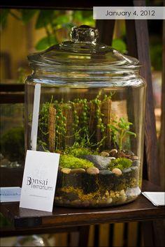 Bonsai Terrarium -- Amazingly cool terrariums