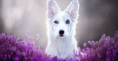 This Polish Photographer Takes The Most Beautiful Dog Photos Ever (13 Pics)…
