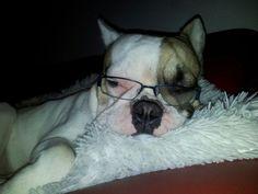 Arthur Vom Wietkiekenberg, The Funny French Bulldog