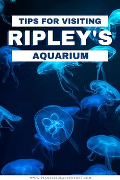 Are you looking for things to do in Toronto with kids? Visit Ripley's Aquarium in Toronto and plan for the best day with these tips. I things to do in Ontario I where to go in Ontario I places to go in Ontario I Ontario travel I what to do in Toronto I Ontario Canada I Toronto travel tips I family travel in Toronto I things to do in Toronto with children I family activities in Toronto I Toronto attractions I places to go in Toronto I #Ontario #Toronto #Canada Toronto Vacation, Toronto Travel, Visit Toronto, Toronto Canada, Road Trip Theme, Travel Tips, Travel Advice, Travel Guides, Travel Destinations