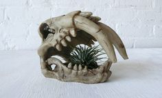 Saber Tooth Tiger Skull Air Plant Garden by EarthSeaWarrior, $45.00