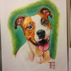 And here is a dog i painted #color#pen#dog#amstaff#art#ink#göteborg#gbg#worldofpencils @artsnapper @art_motive @artists_community @artofdrawingg @nawden