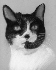 Custom Pastel Pet Cat Portrait Commissions £65 - £85 Hand drawn by Bob caring for his friend with #MS.  #SpoonieCraft #Carer #Art #InvisibleIllnessWeek