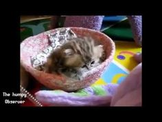 ▶ Prepare to have your heart melted. - YouTube THIS IS A KEEPER!!