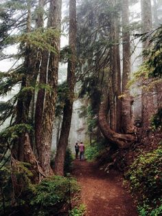 Wonderland trail, Mt Rainier National Park, Washington, USA (by Kevin Russ) Oh The Places You'll Go, Places To Travel, Places To Visit, Yellowstone Nationalpark, Wonderland Trail, Mt Rainier National Park, Sequoia National Park, Clearwater Beach, Parcs